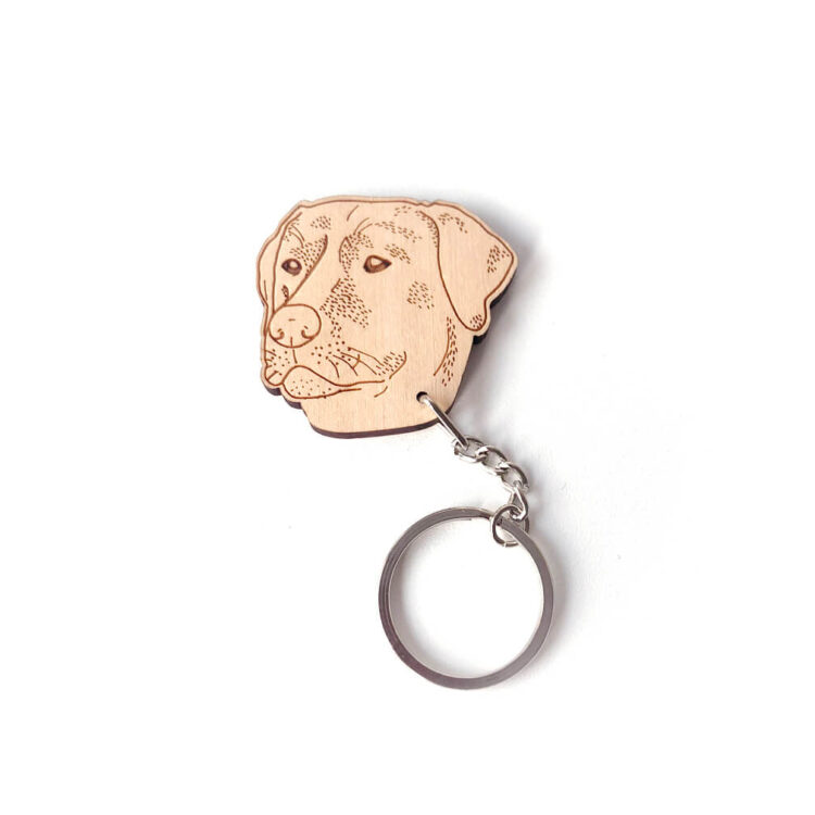 Labrador-chocolate